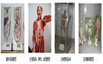 运动解剖学实验室